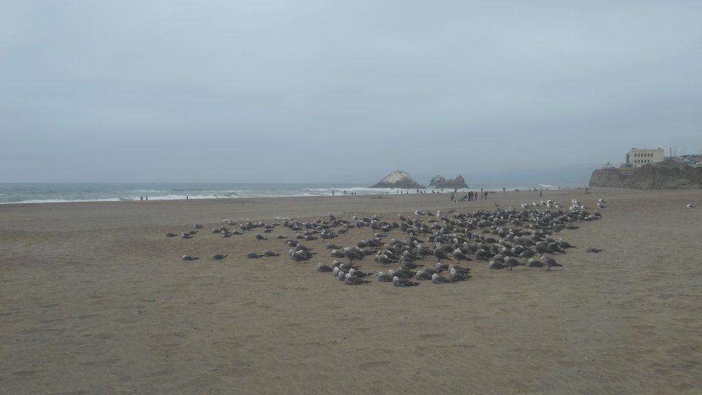 sf-ocean-beach-3