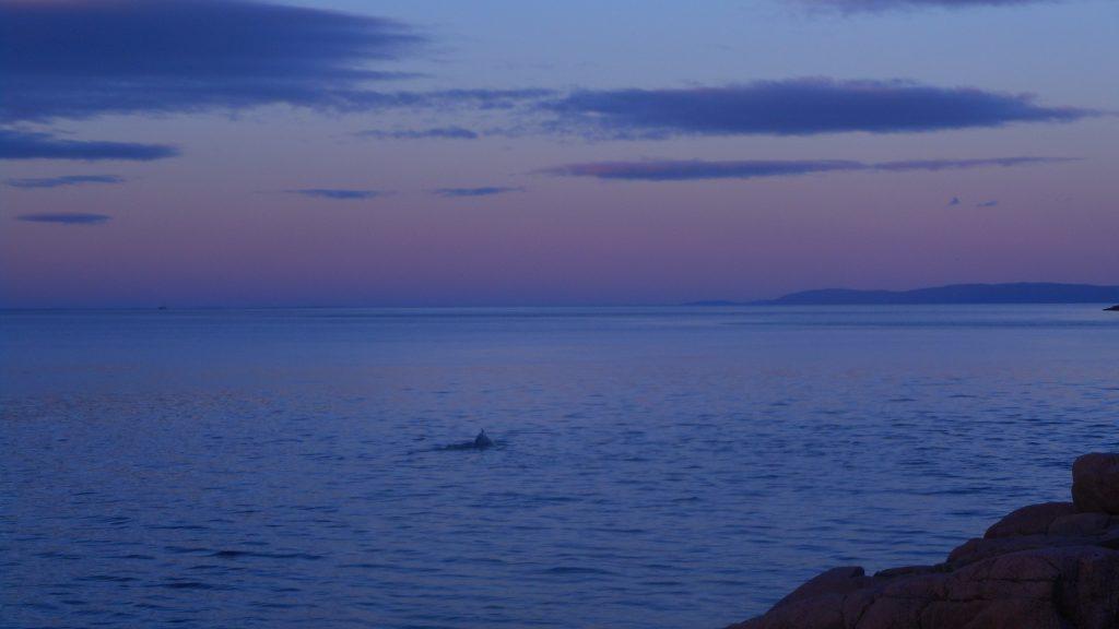 bilan-6mois-baleine