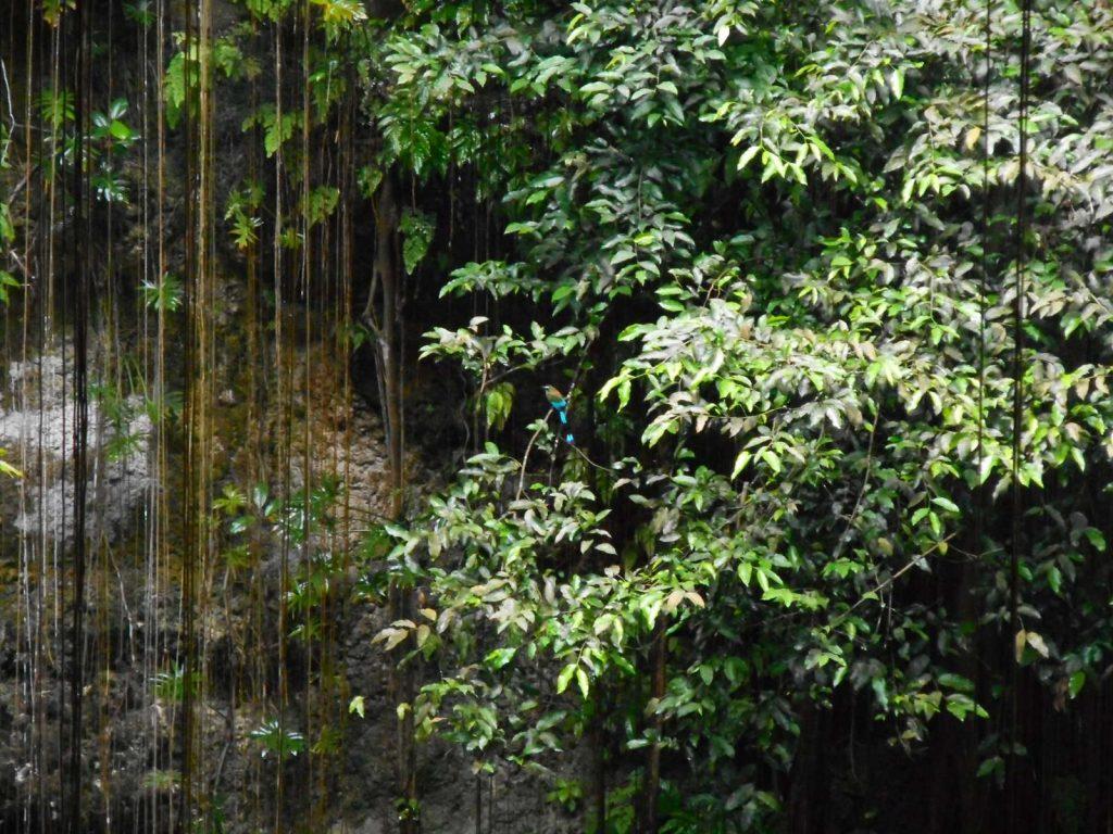 mexique-cenote-ikkil