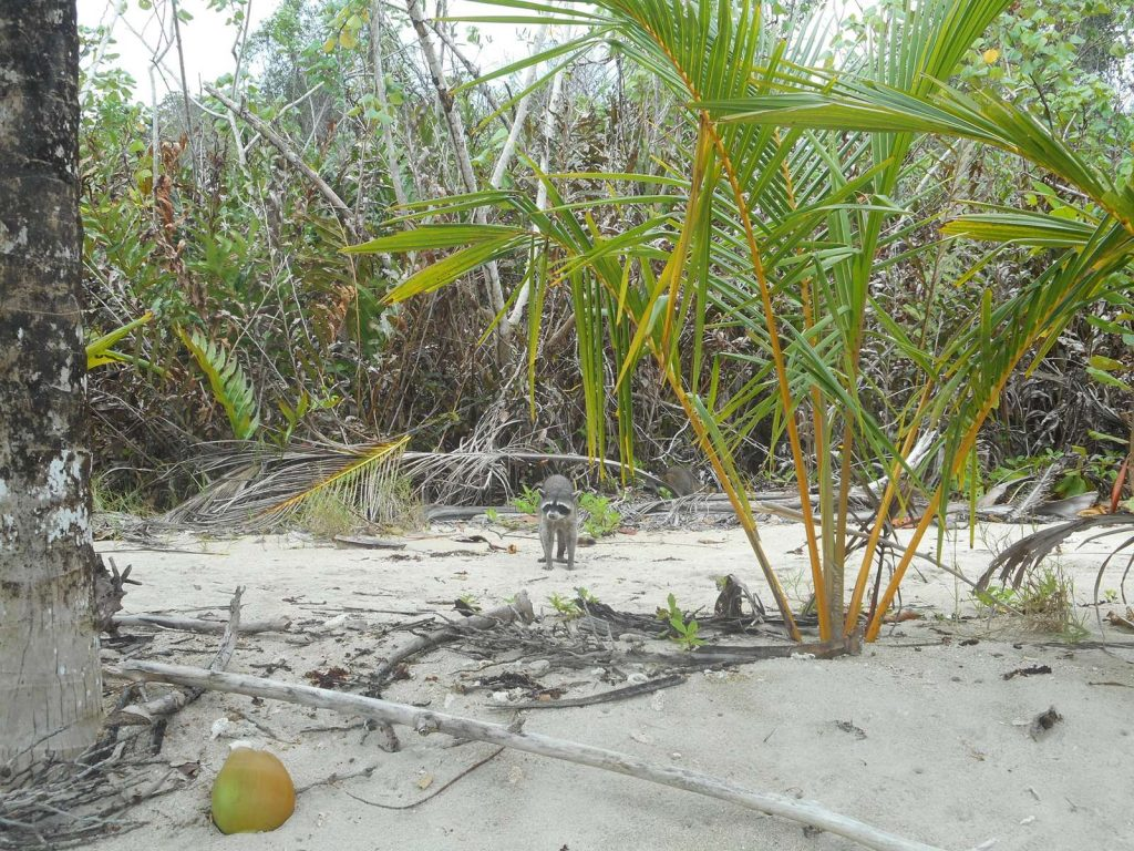 costarica-cahuita
