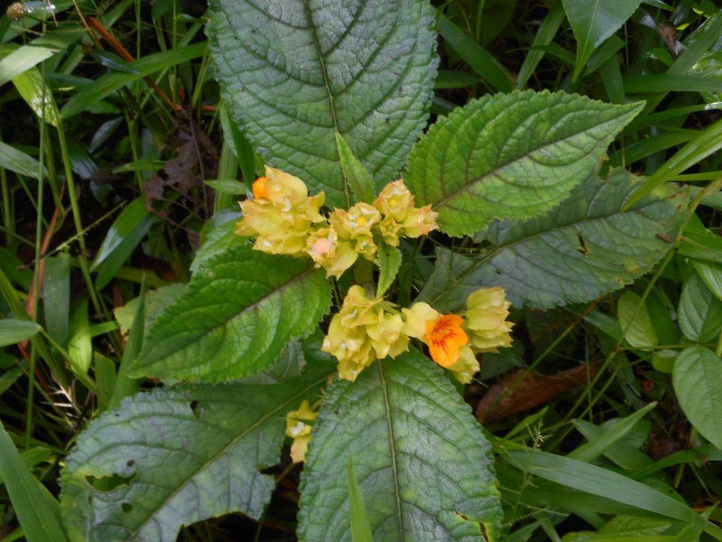 costarica-manuel-antonio