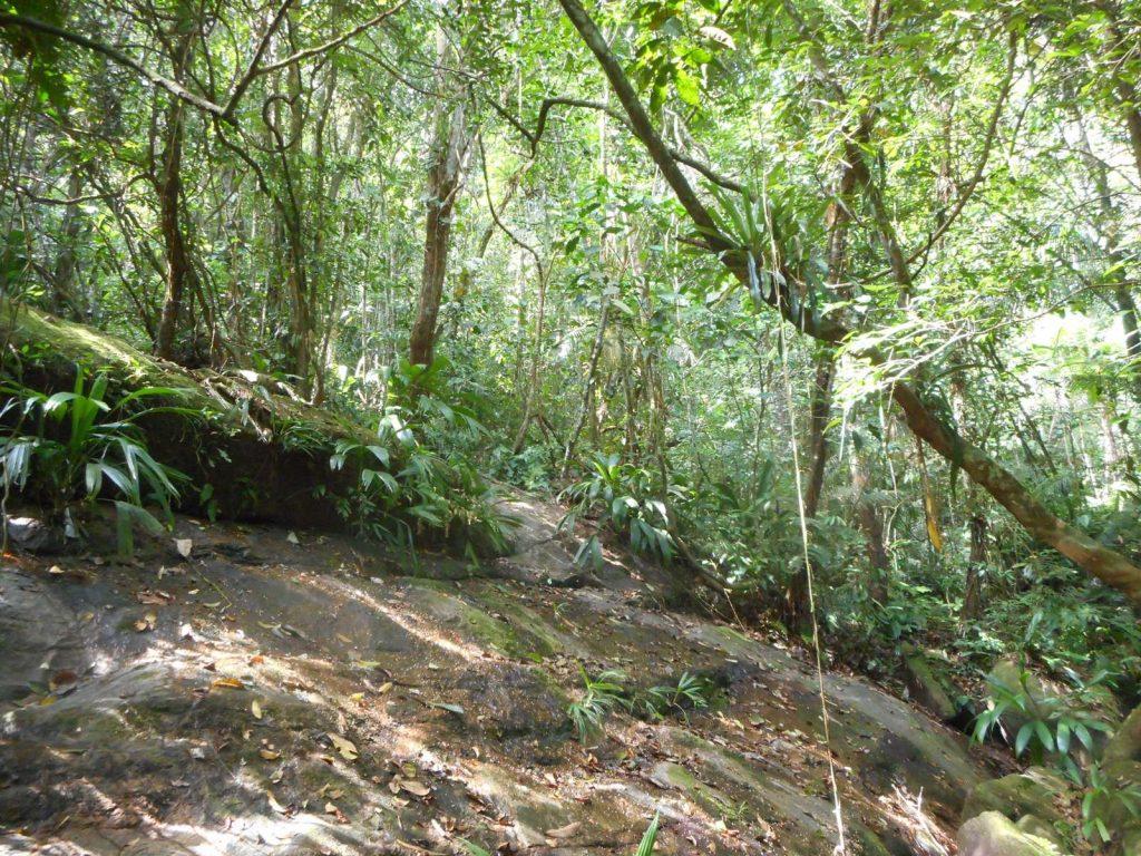 bresil-trindade-jungle
